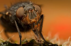 Fly on Moss 2 by Alliec