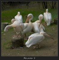 Pelican2 by caro77