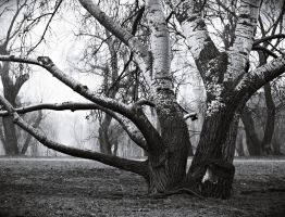 may your roots grow deeper by PsycheAnamnesis