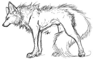wolf lineart by the-lazy-artist