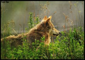 The Lone Wolf by theorganisedmessUK