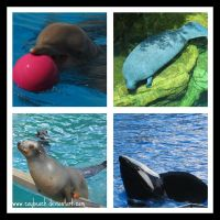 Marine Mammal Collage by caybeach