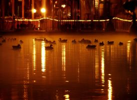 Other Ducks in Budapest by simonepav