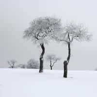 wintertime III by indojo