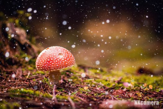 Forest Fairytale by NXcamera
