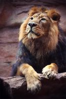 The king by Fiorildi
