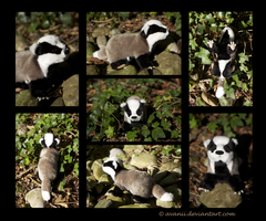Plushie: Bartholomew the European Badger by Avanii