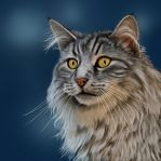 maine coon by greedy-peri