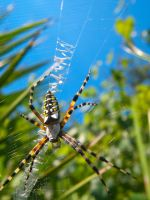 Golden Orb Weaver by BloodyMinded6