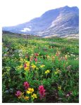 Mountain Flowers by evaPM