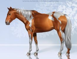 American paint horse by Aomori