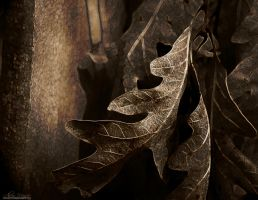 Leaves and Fence by alimuse