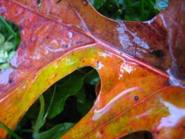 Fall Leaves 6 by Holly6669666