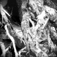 The Roots of a Tree 8 by Jude-Monteleone