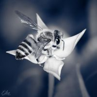 Dark Bee by Eibo-Jeddah