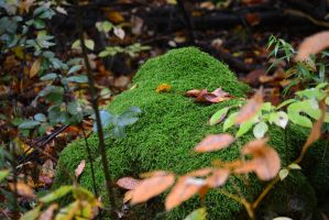 Moss on a Rock by Gr8-Gatensby
