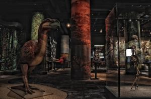 Awesome Giant Bird by HenrikSundholm