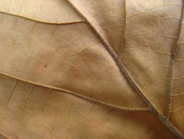 Leaf 1 by bombstock
