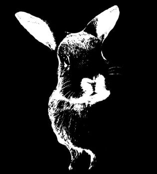 Graphic Bunny by addicted2yaoi