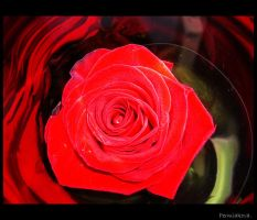 your_rose by Permiak