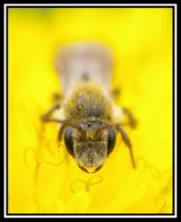 Bee face by jesse-botanical