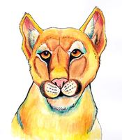 Mountain Lion by lilithskull