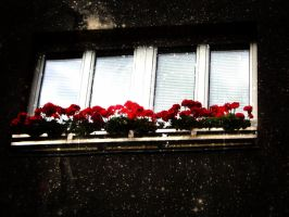 Window in the Stars by OshinP