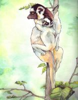 Sifakas by spiderlady