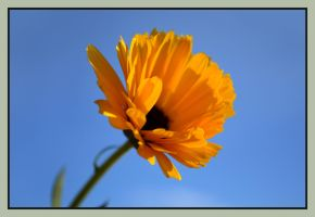 Flower at sunset by Dan52T
