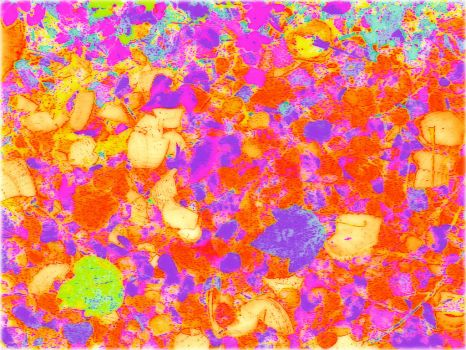 Rocks, Leaves and Broken Shells Abstracted by KittenDiotima
