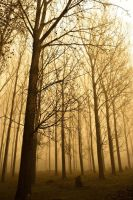 Foggy Forest. by A-Dying-Nightingale