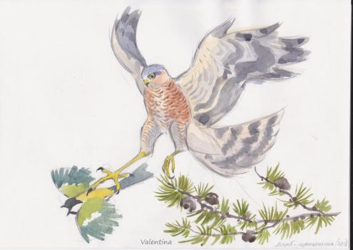 Sparrowhawk by ValyushaArt