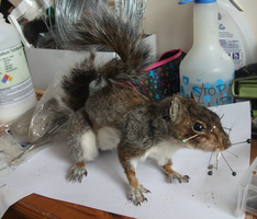 Squirrel taxidermy WIP by EternalEmporium