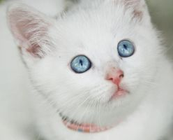 White cat by MaliaMia