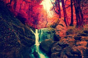 Red Forest by wildfox76