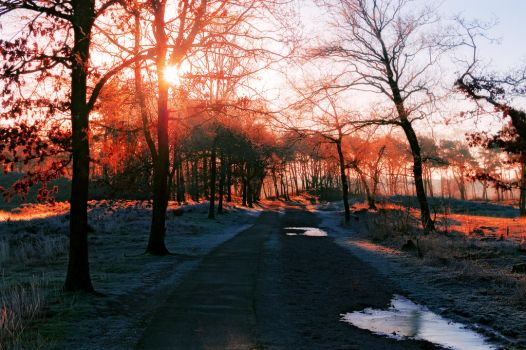 .: A Winters Walk :. by syntheticdreamer