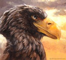 Sea Eagle by kenket