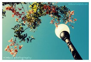 lamp and leaves by i-am-nimbus