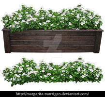 White flowers in a pot by margarita-morrigan