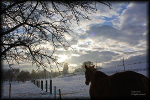 Horse view by vodoc