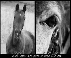 Horses are part of who I am by Sashay007