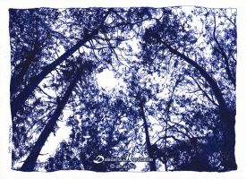 Blue trees by dh6art