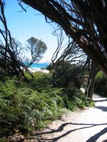 Path to beach by BandyVVhips