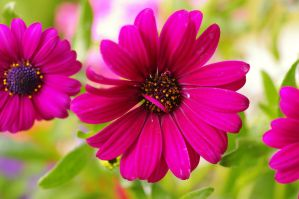 Flowers of the Polar Star I by expression-stock