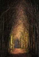 Tunnel Arbres by Euphoria59