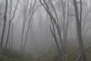 Enveloped Through Mist and Boughs II. by swampliquor