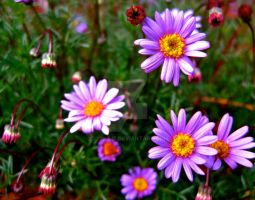Purple Daisies by xxLiLLiE