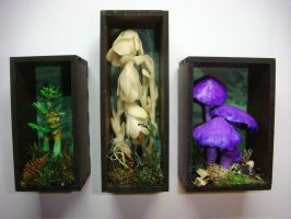 Botanical Shadow Boxes by Ethereal-Beings