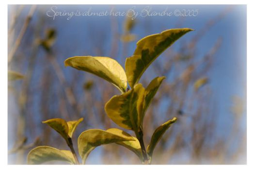 spring is almost here 2 by blancheje