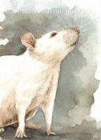 Curious Rat ACEO by Pannya